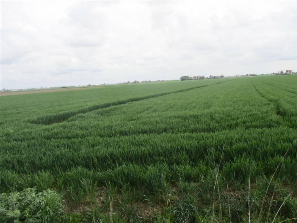 Terreno Agricolo in vendita a Masi Torello, 9999 locali, prezzo € 28.000 | CambioCasa.it