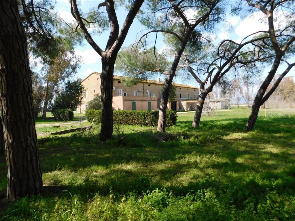 Azienda agricola, Follonica, da ristrutturare