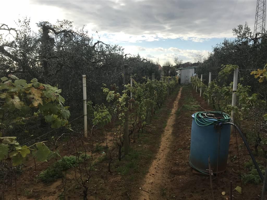 Terreno agricolo, Piombino