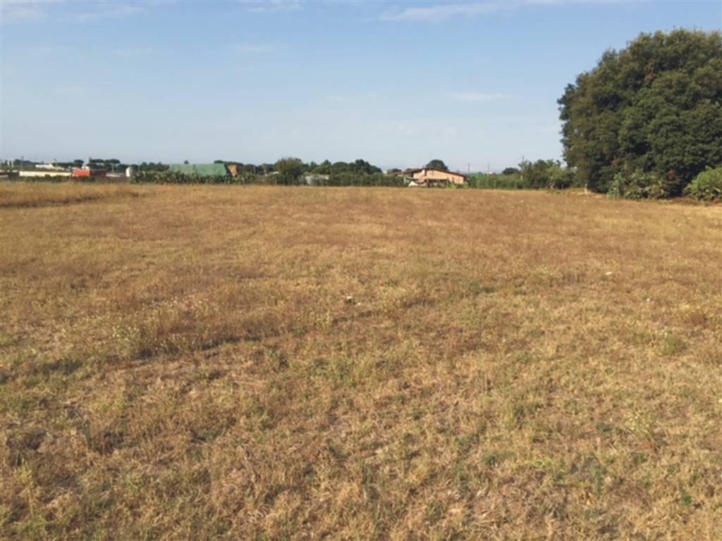 Terreno Agricolo in vendita a Nettuno, 1 locali, zona Zona: Piscina Cardillo, prezzo € 60.000   CambioCasa.it