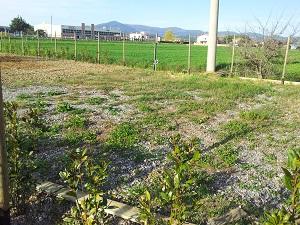 Terreno agricolo a MONTESCUDAIO