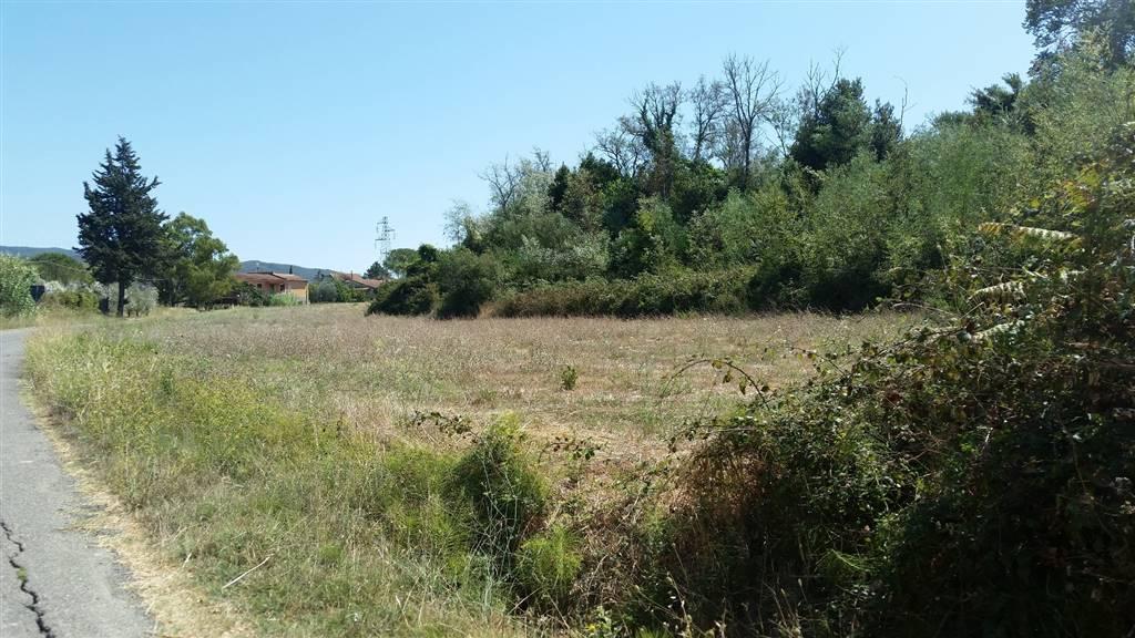 Terreno agricolo a CASTELLINA MARITTIMA