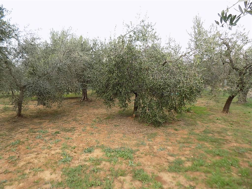 Annessi agricoli livorno in vendita e in affitto cerco annesso agricolo livorno e provincia su - Bagno da gigi cecina ...
