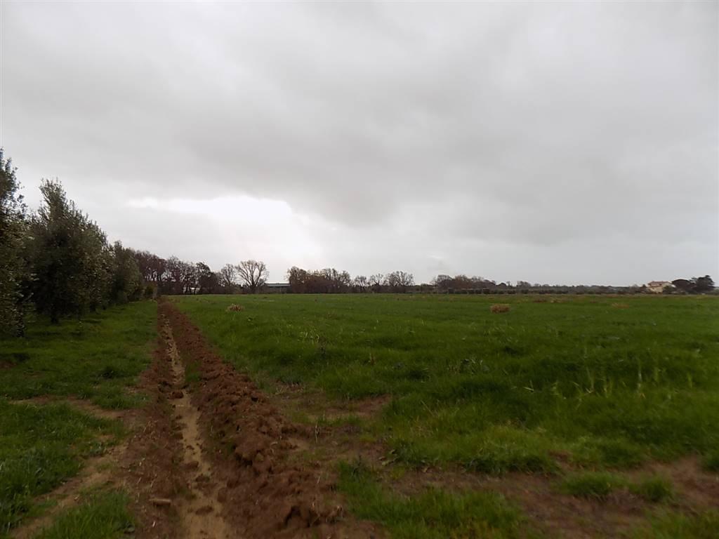 Terreno agricolo a ROSIGNANO MARITTIMO