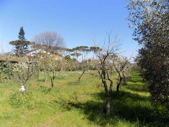 Terreno agricolo, Cecina