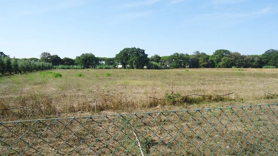 Terreno agricolo a CASTAGNETO CARDUCCI