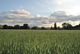 Terreno agricoloaCASTAGNETO CARDUCCI