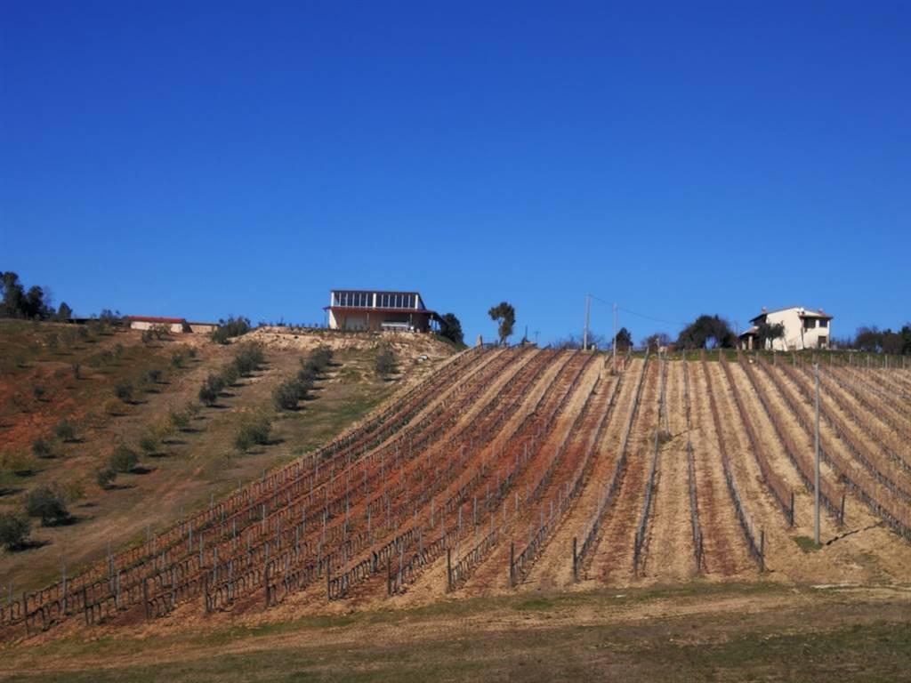 Azienda agricola in Monte Bamboli, Massa Marittima
