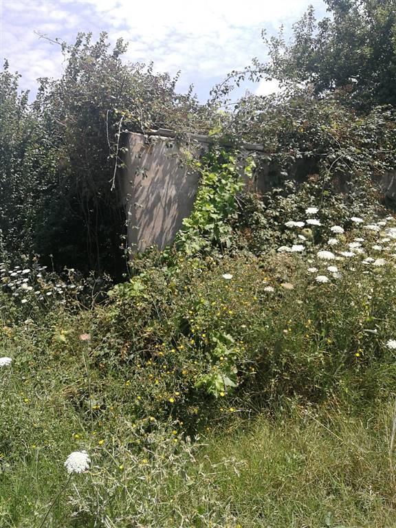 Terreno agricolo in Campagna Limitrofa, Riotorto, Piombino
