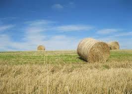 Terreno agricoloaLENDINARA