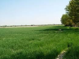 Terreno Agricolo in vendita a Castel d'Ario, 9999 locali, prezzo € 500.000 | CambioCasa.it