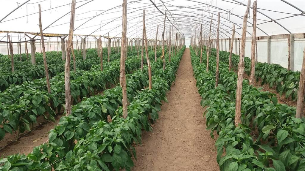CAVALLINO, CAVALLINO-TREPORTI, Landwirtschaftliches Grundstueck zu verkaufen von 15000 Qm, Energie-klasse: Nicht unterstellt, zusammengestellt von: ,