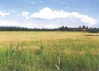 Terreno Agricolo in vendita a Montecatini-Terme, 9999 locali, zona Zona: Biscolla, prezzo € 50.000 | CambioCasa.it
