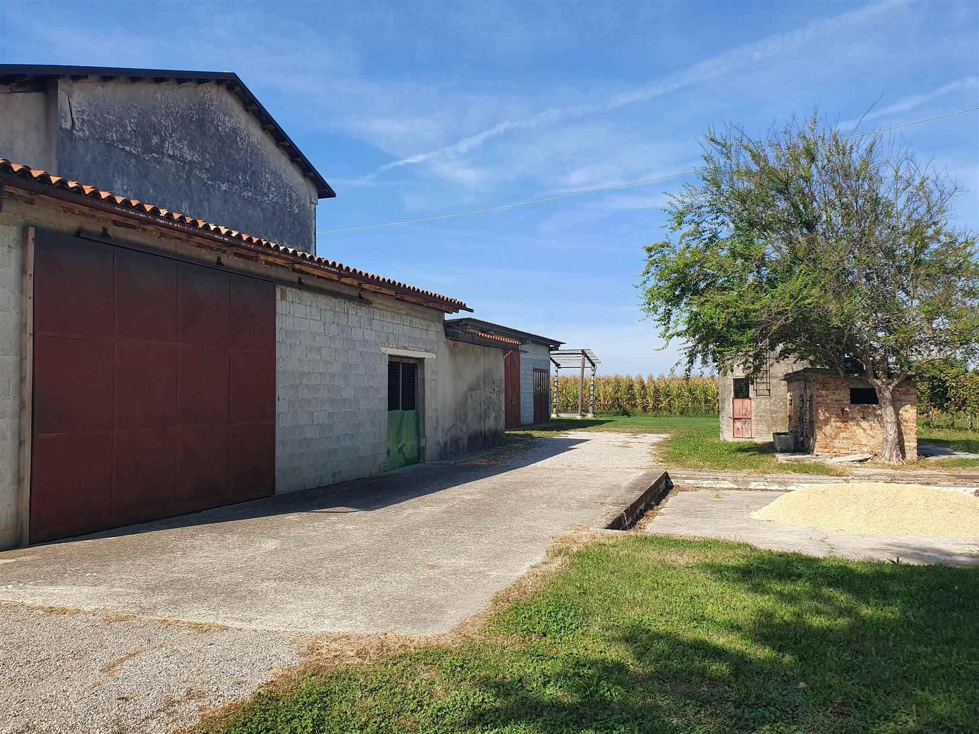 JESOLO CASALE doppia abitazione con terreno viticolo Foto 4