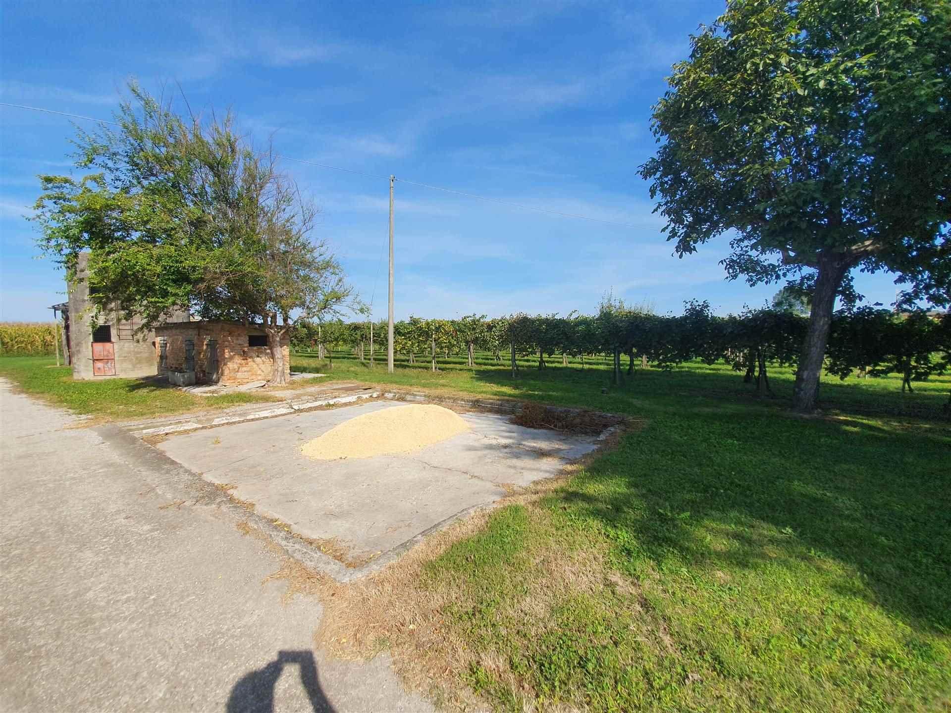 JESOLO CASALE doppia abitazione con terreno viticolo Foto 6