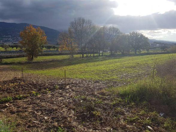 Terreno Edificabile Residenziale in vendita a Montalto Uffugo, 9999 locali, zona Località: STAZIONE DI MONTALTO, prezzo € 40.000 | CambioCasa.it