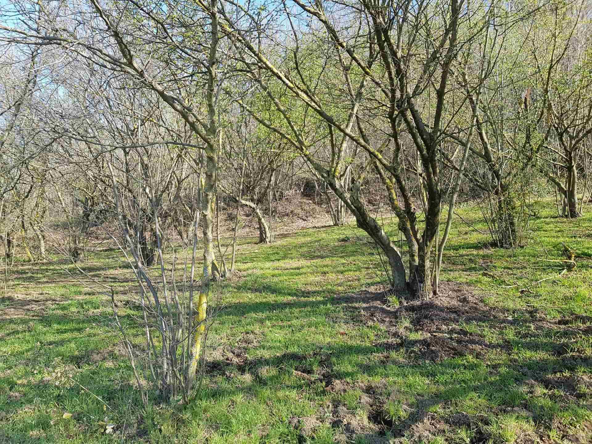 Terreno Agricolo in vendita a Manocalzati, 9999 locali, prezzo € 25.000 | CambioCasa.it