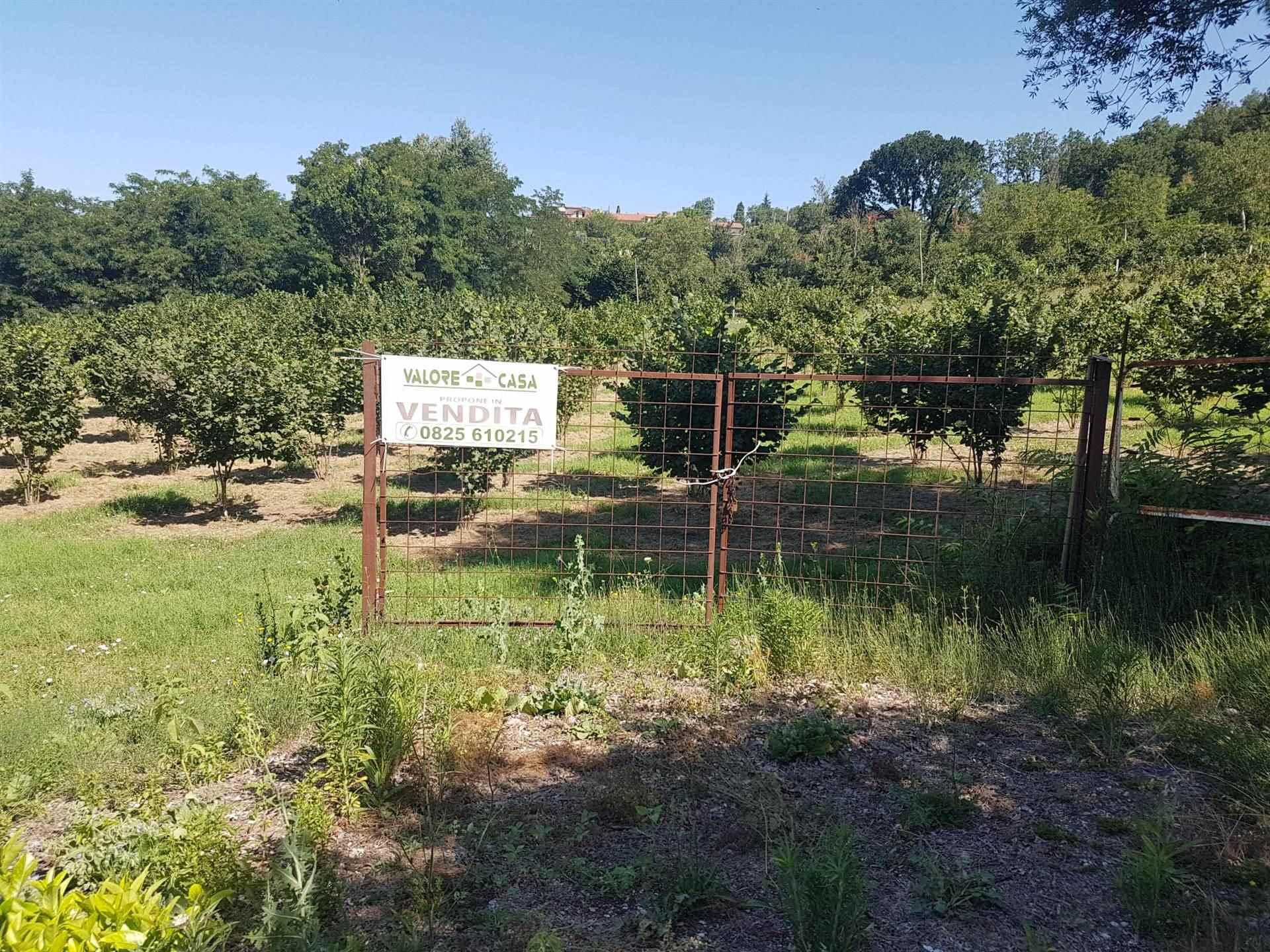 Terreno Agricolo in vendita a Manocalzati, 9999 locali, prezzo € 54.000   CambioCasa.it
