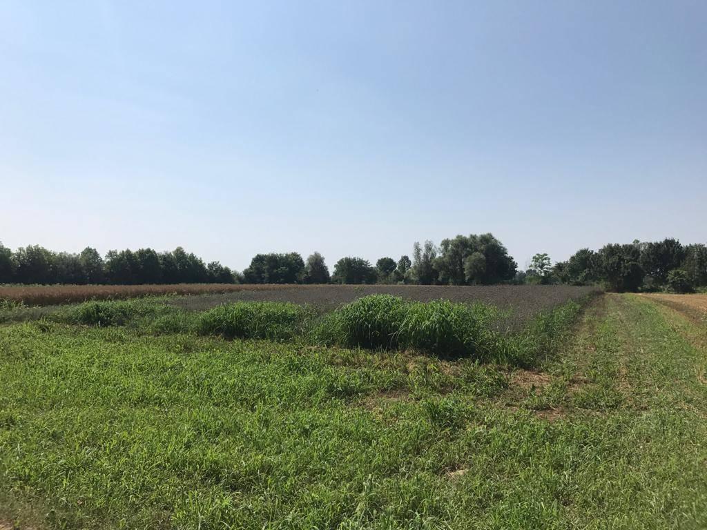 Terreno Agricolo in vendita a Scorzè, 9999 locali, zona Zona: Peseggia, prezzo € 46.000 | CambioCasa.it