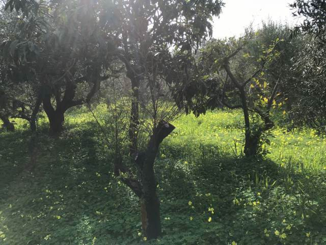 ALTOFONTE, Building plot of land for sale of 3000 Sq. mt., Energetic class: Not subject, Epi: 0 kwh/m2 year, composed by: , Price: Eu. 20,000