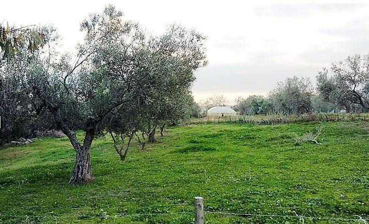 Terreno agricolo, Tuscania, da ristrutturare