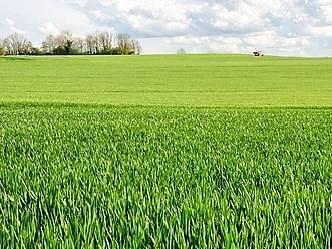 Terreno Agricolo in vendita a Tuscania, 6 locali, prezzo € 70.000 | CambioCasa.it
