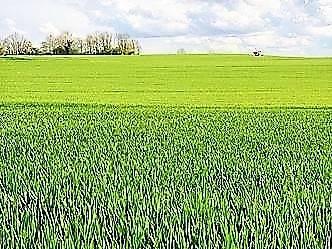 Terreno Agricolo in vendita a Tuscania, 9999 locali, prezzo € 43.000 | CambioCasa.it