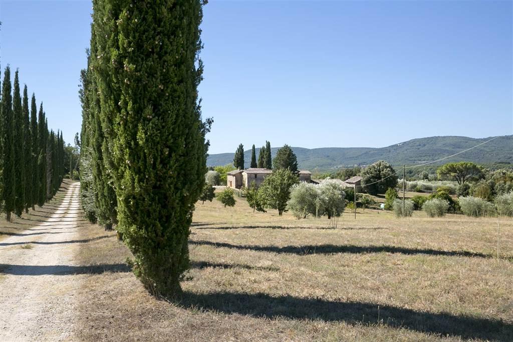 Borgo composto da un corpo principale di mq 310 in ottime condizioni, oltre a due capanne ed un grande fienile ancora da ristrutturare per altri mq