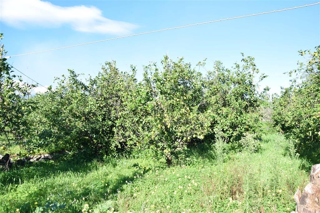 Terreno agricolo in Via San Martino 1/a, Carruba, Giarre