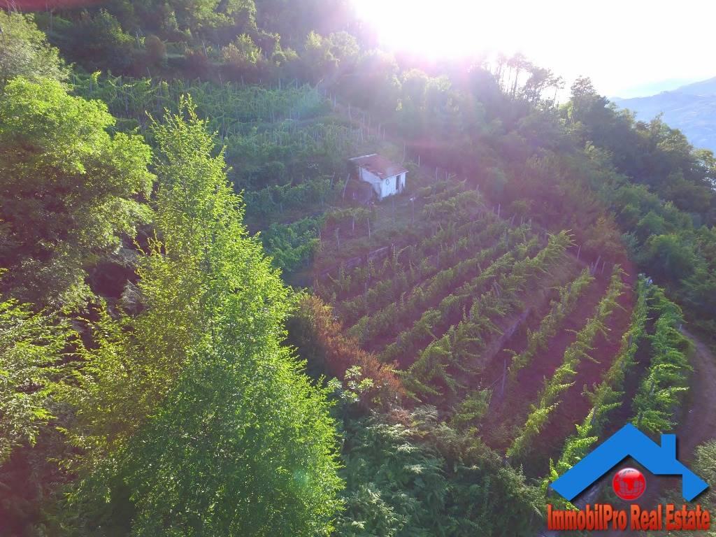 Terreno Agricolo in vendita a Levanto, 1 locali, prezzo € 50.000 | PortaleAgenzieImmobiliari.it
