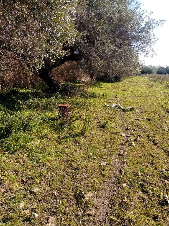 Terreno Agricolo in vendita a Palazzolo Acreide, 1 locali, prezzo € 75.000 | CambioCasa.it