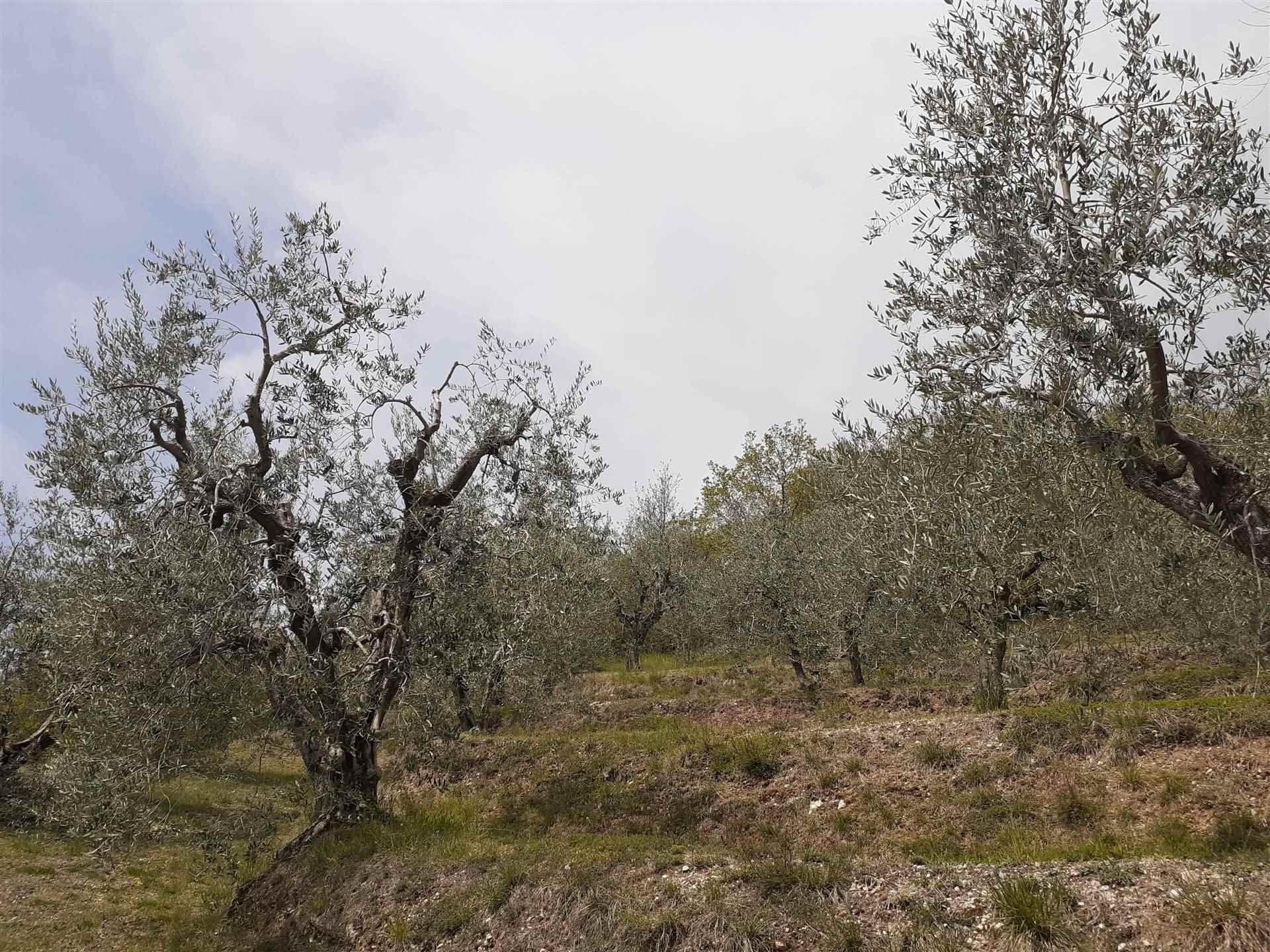 Terreno Agricolo in vendita a Polpenazze del Garda, 9999 locali, prezzo € 132.500 | PortaleAgenzieImmobiliari.it