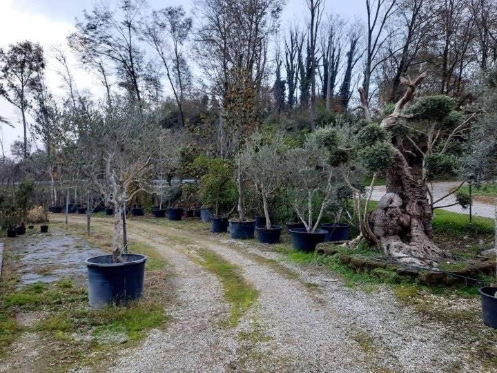 Terreno Agricolo in vendita a Padenghe sul Garda, 9999 locali, prezzo € 453.000 | CambioCasa.it