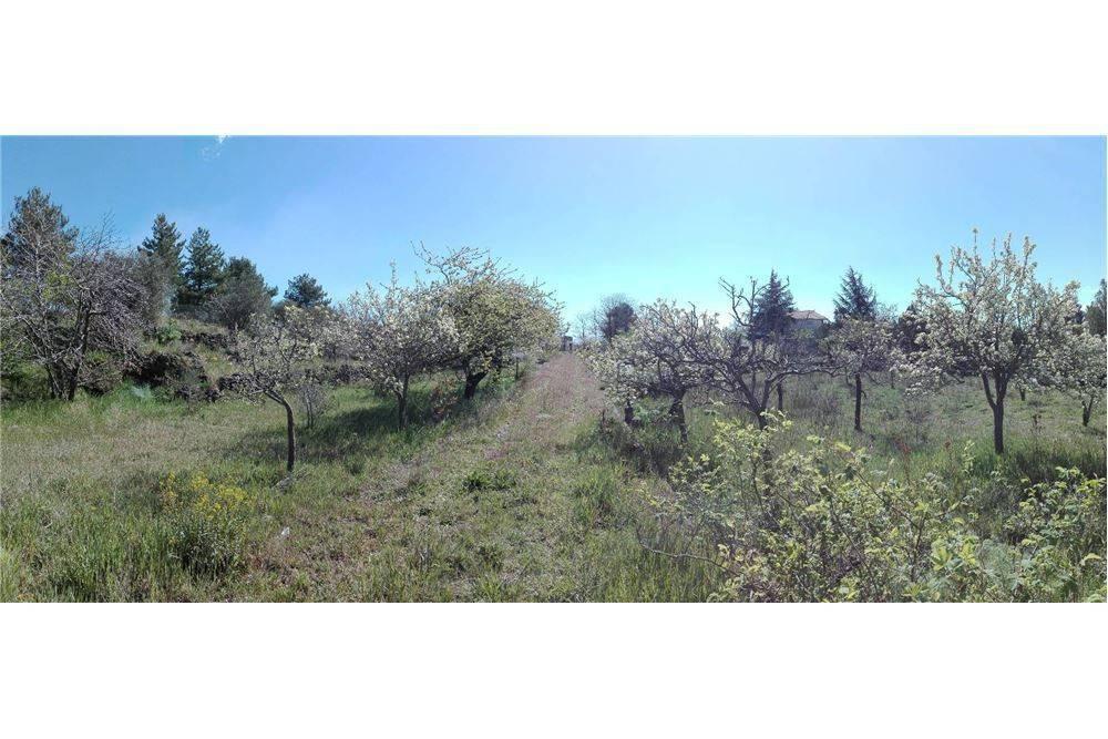 Terreno agricolo in Contrada Segreta, Belpasso