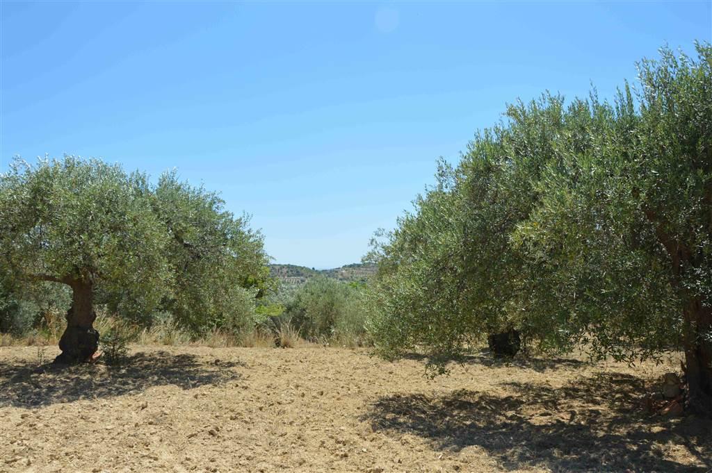 Terreno Agricolo in vendita a Noto, 9999 locali, prezzo € 80.000   CambioCasa.it