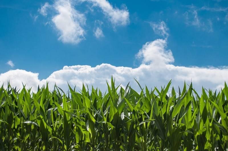 Terreno Agricolo in Vendita a Monselice