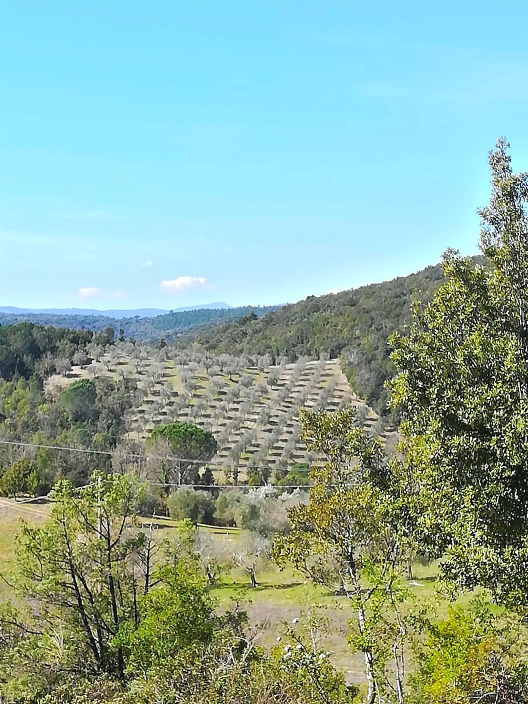 Nel Comune di Murlo, in località Olivello in bellissima posizione , proponiamo terreno agricolo di ca. 2,50 ettari con 4.000 olivi in produzione.