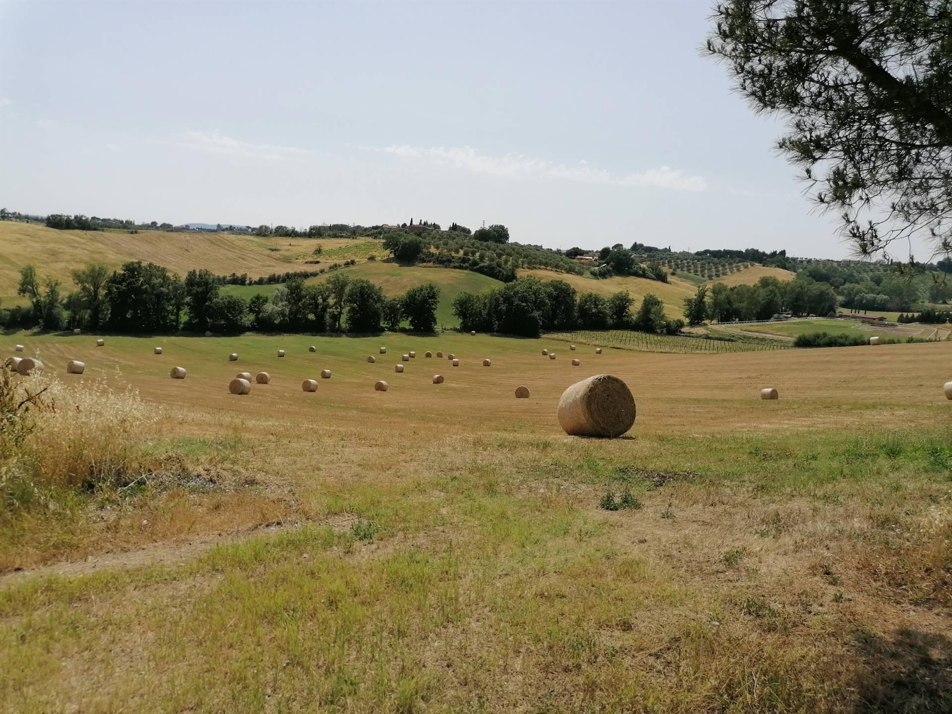 In zona Cerchiaia, proponiamo 18 ettari di terreno seminativo. Il terreno è facilmente accessibile con i mezzi ed è ubicato in prossimità della città.